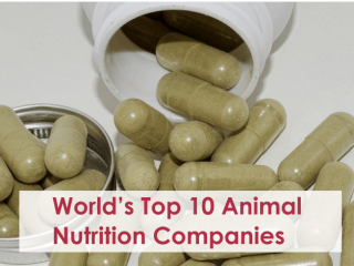 World's Top 10 Animal Nutrition Companies