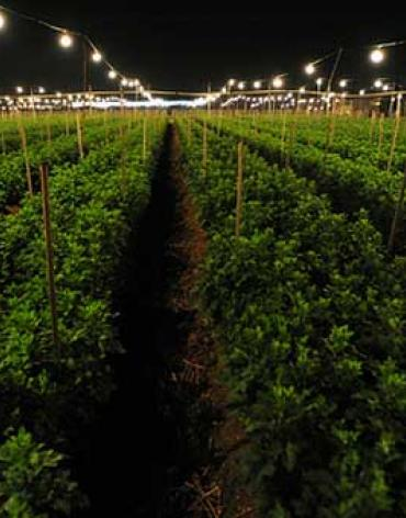 Grow Lights for Agriculture Market Shares, Strategies, and Forecasts, Worldwide, 2014 to 2020